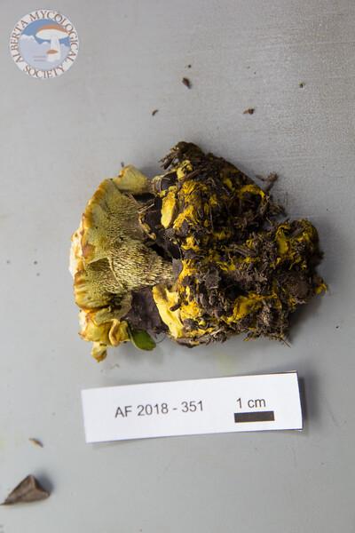 ABF-2018-351