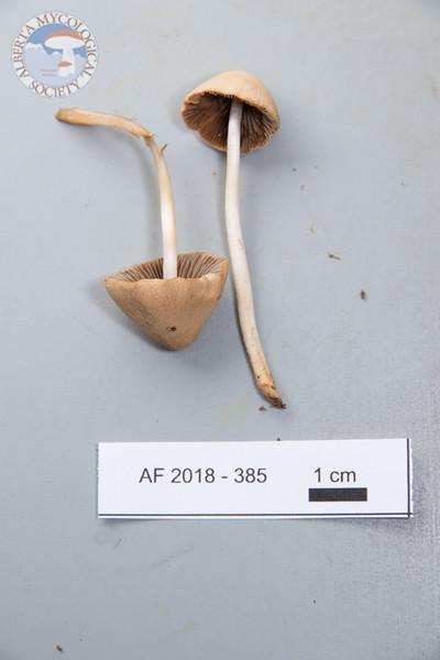 ABF-2018-3854