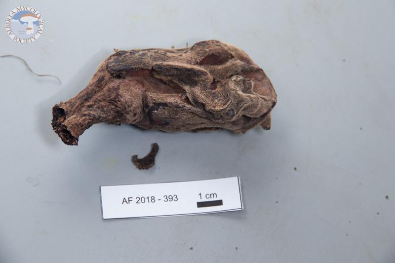 ABF-2018-393