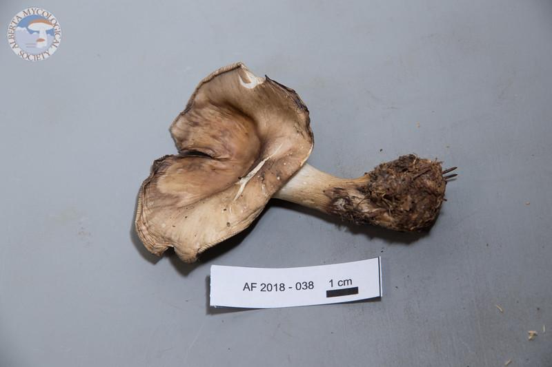 ABF-2018-038