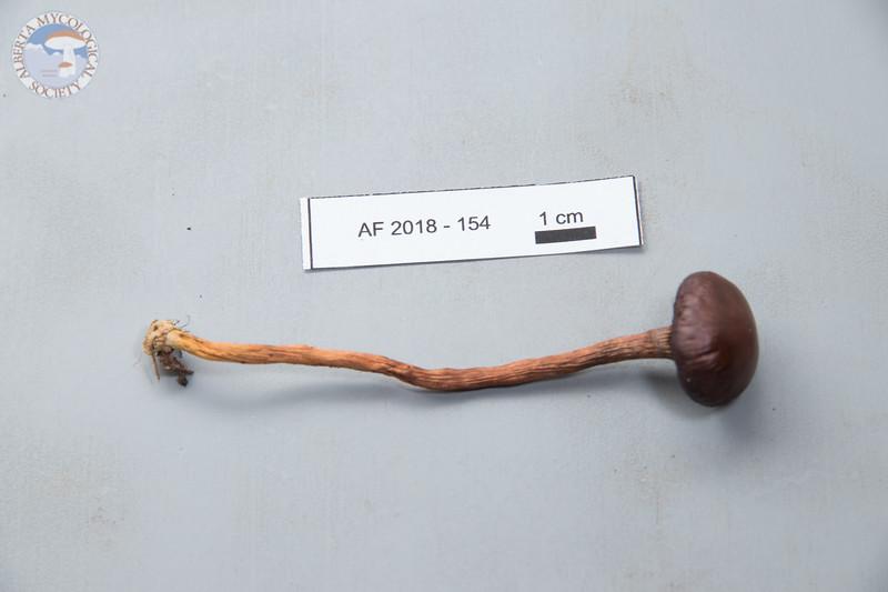 ABF-2018-154