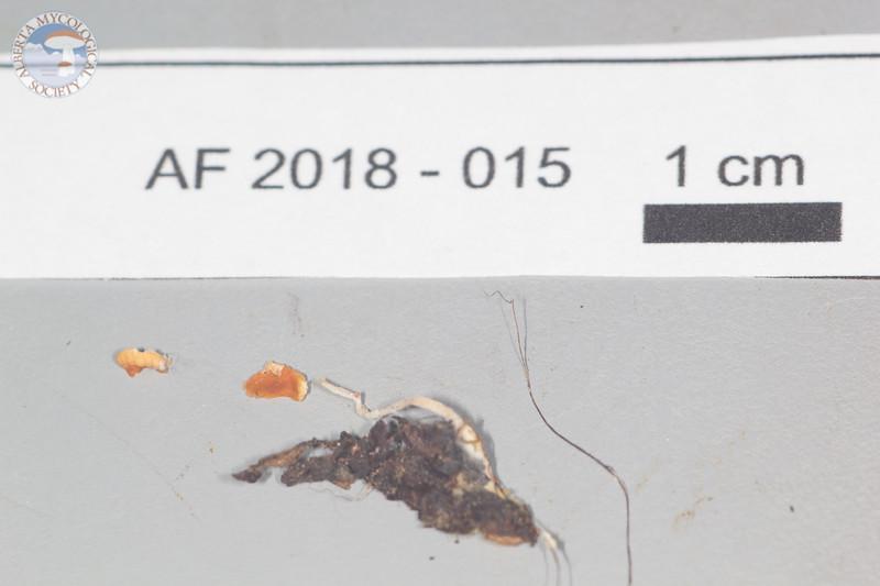 ABF-2018-015