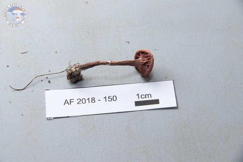 ABF-2018-150