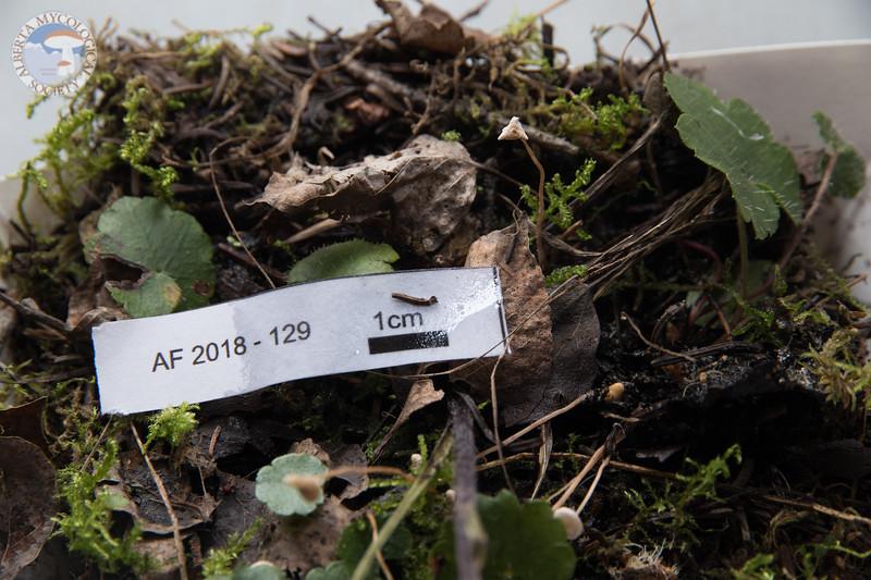 ABF-2018-129