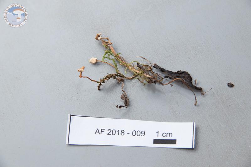 ABF-2018-009