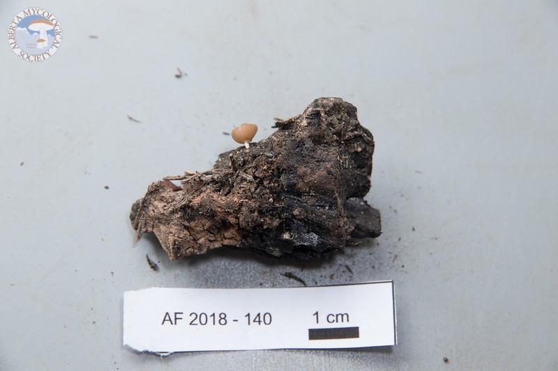ABF-2018-140