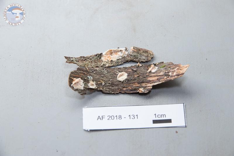 ABF-2018-131