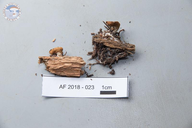 ABF-2018-023