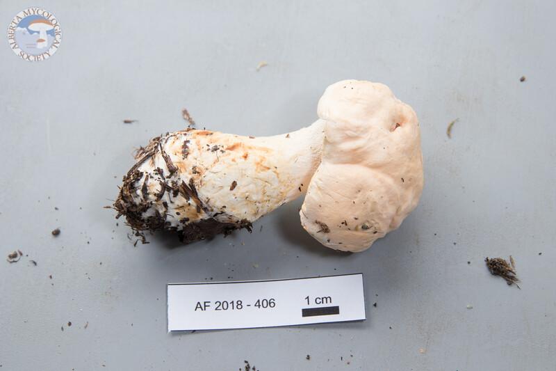 ABF-2018-406