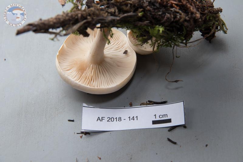 ABF-2018-141