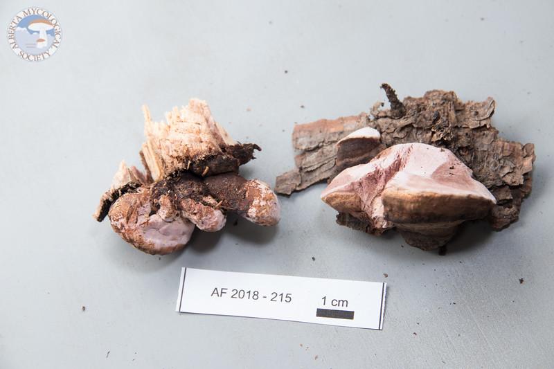 ABF-2018-215