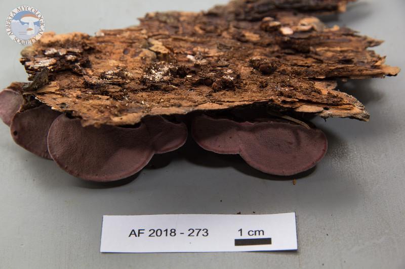 ABF-2018-273