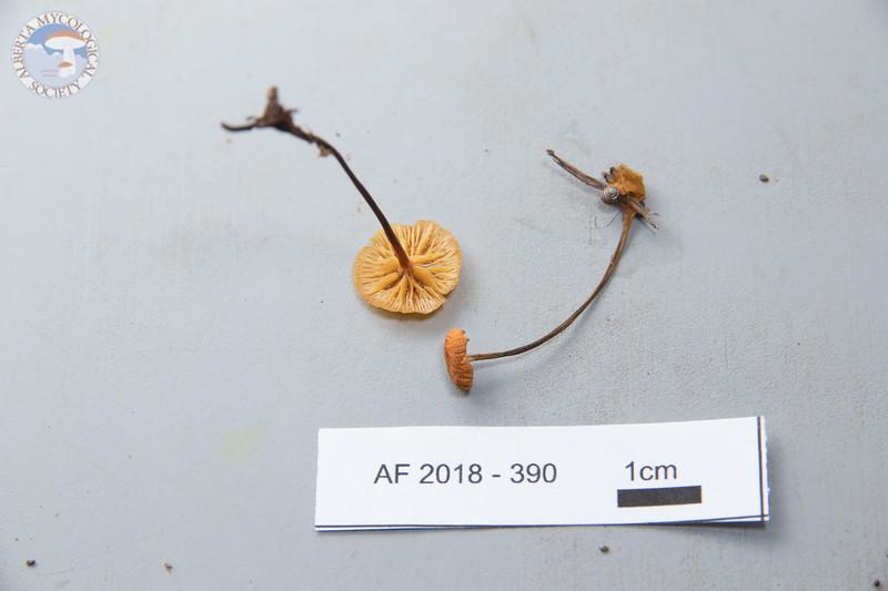 ABF-2018-390