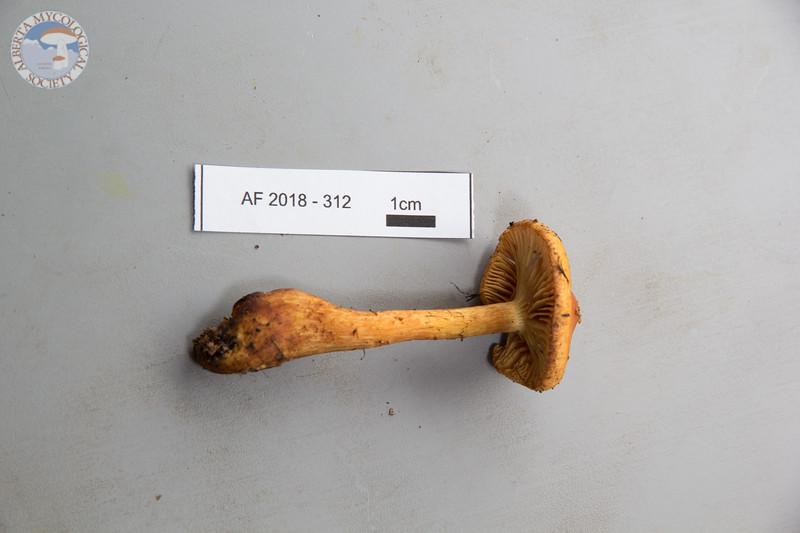 ABF-2018-312