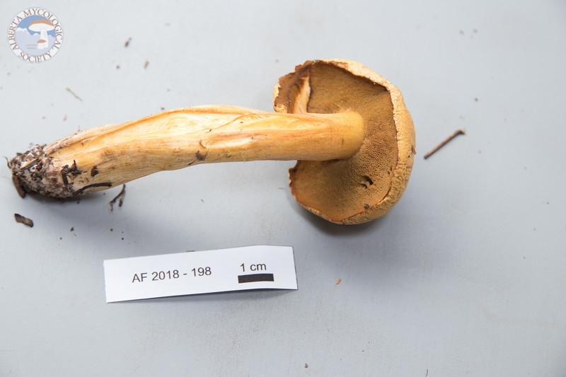 ABF-2018-198
