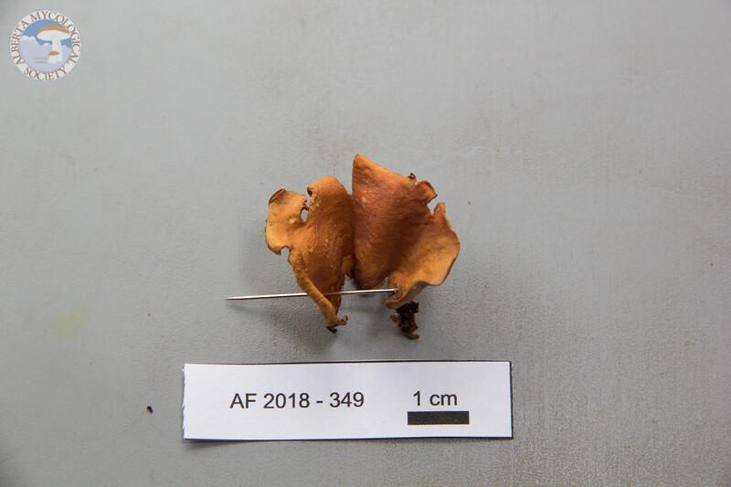 ABF-2018-349