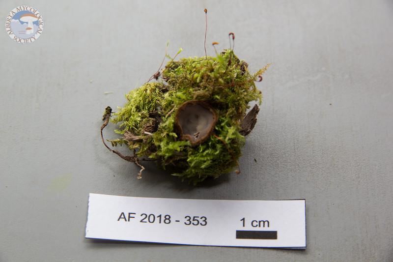 ABF-2018-353