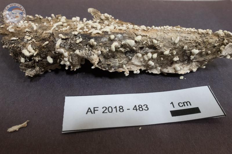 ABF-2018-483