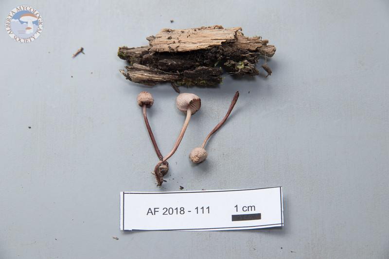 ABF-2018-111