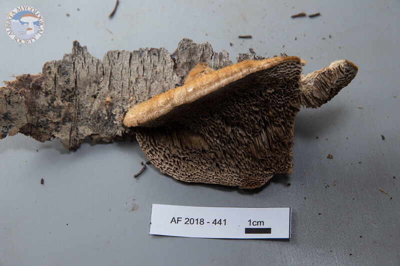 ABF-2018-441