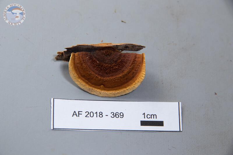 ABF-2018-369