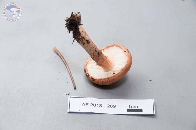 ABF-2018-269