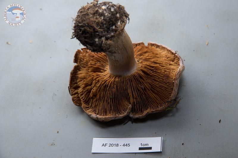 ABF-2018-453
