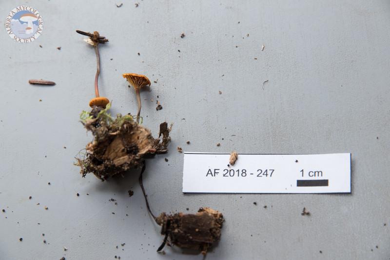 ABF-2018-247