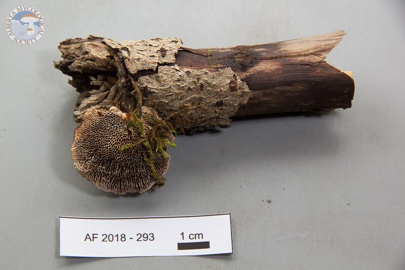 ABF-2018-293