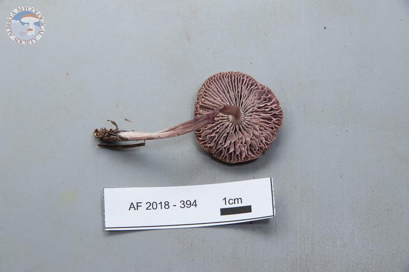 ABF-2018-394