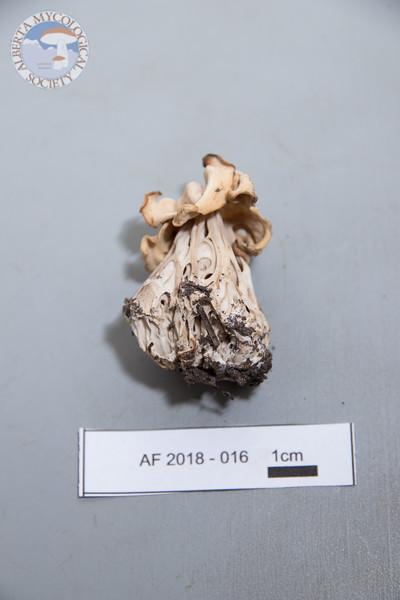 ABF-2018-016
