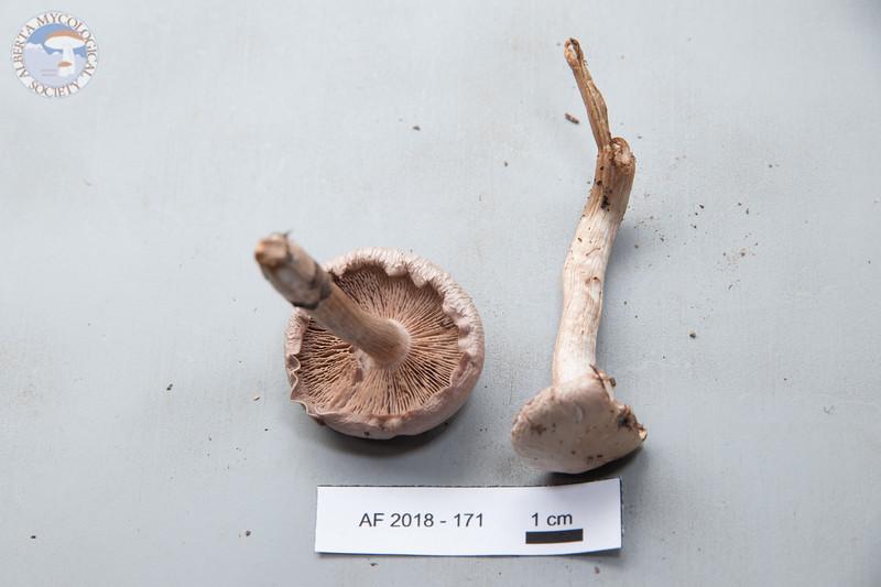 ABF-2018-171