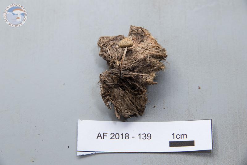 ABF-2018-139
