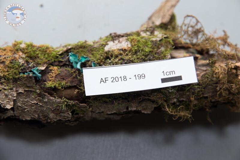 ABF-2018-199