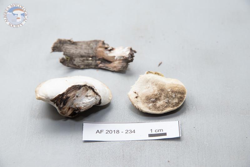 ABF-2018-234