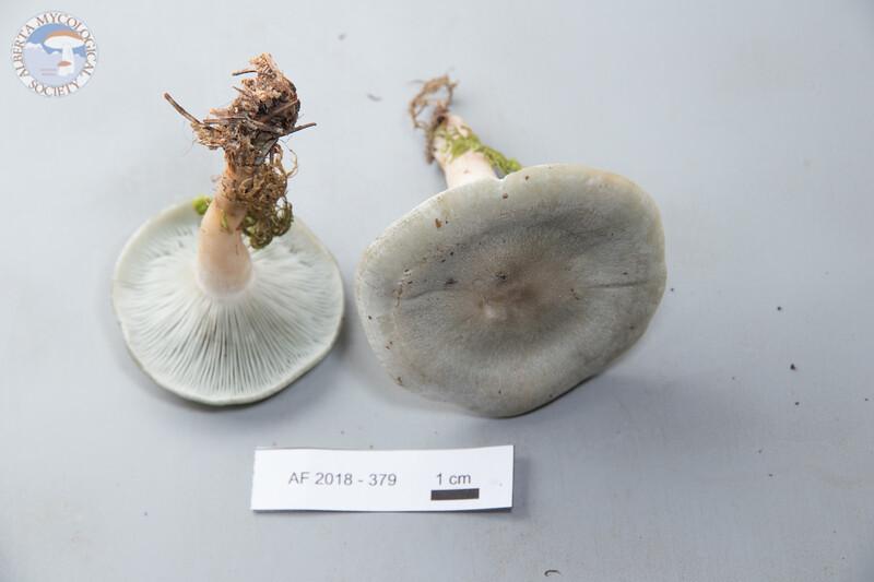 ABF-2018-379