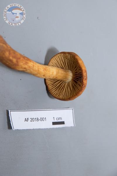 ABF-2018-001