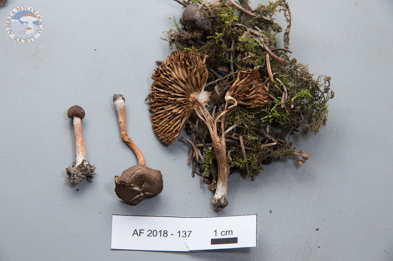 ABF-2018-137
