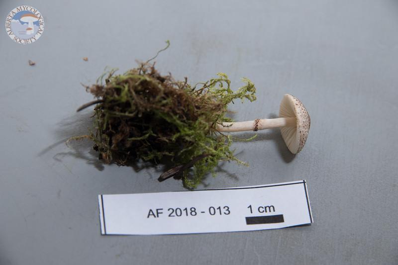 ABF-2018-013