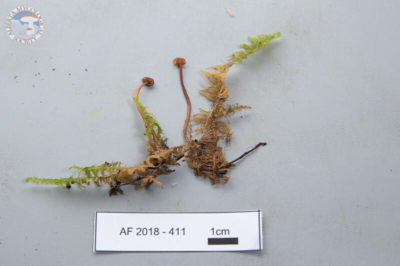 ABF-2018-411