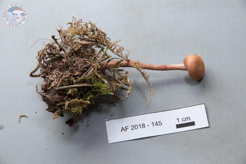 ABF-2018-145