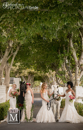 Brides with Horses 01