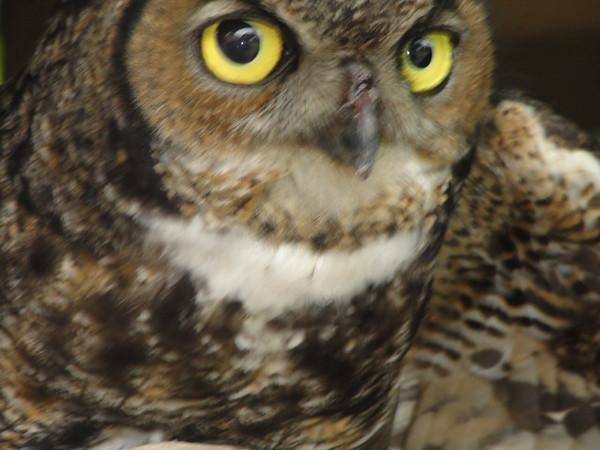 Special Great Owl Poses Album