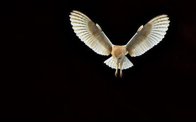 Spectacular Owl Photos