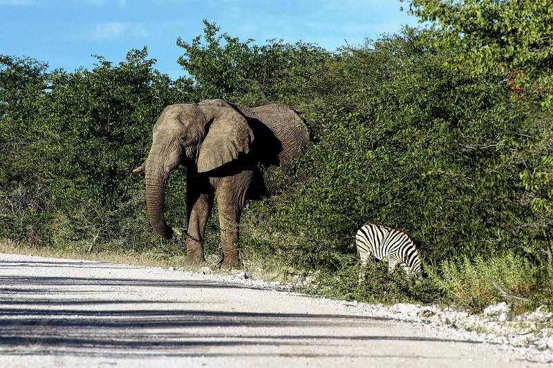 Elephant and Zebra in Etosha National Park, Namibia