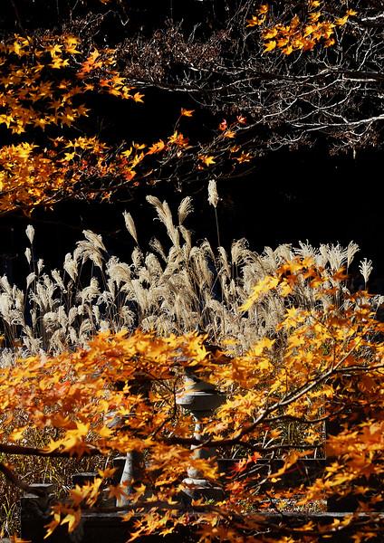 Autumn in Okunoin Cemetery in Japan