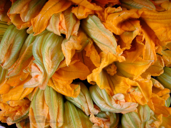 Courgette Flowers