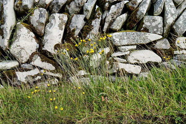 Yellow Flowers by a Dry Stone Wall