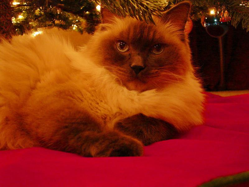 Christmas 2006: Spencer