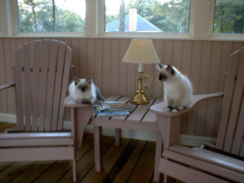 Durham, NH: Kitties on the porch